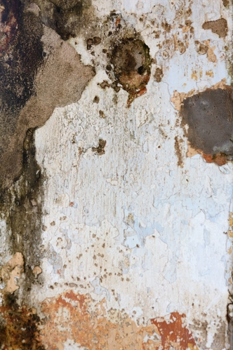 Wall with Mold