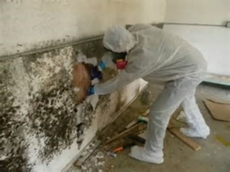 Specialist removing black mold